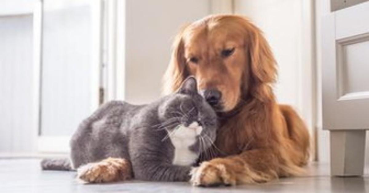 Animali domestici quali sono e quanto ci costano