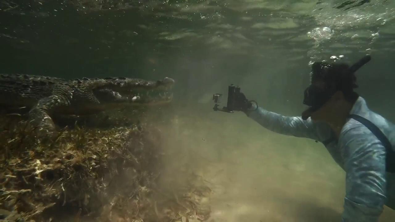 A tu per tu con un coccodrillo il sub riprende lincontro ravvicinato con il predatore