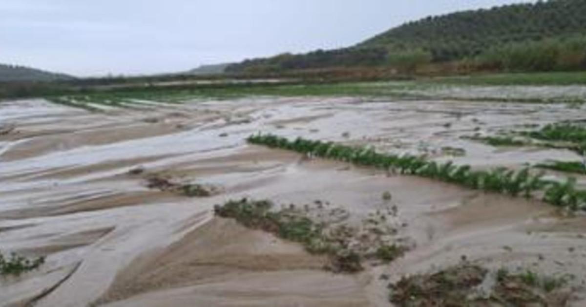 Alluvione a Crotone limprenditrice Turra Milioni di danni al territorio non dimenticateci