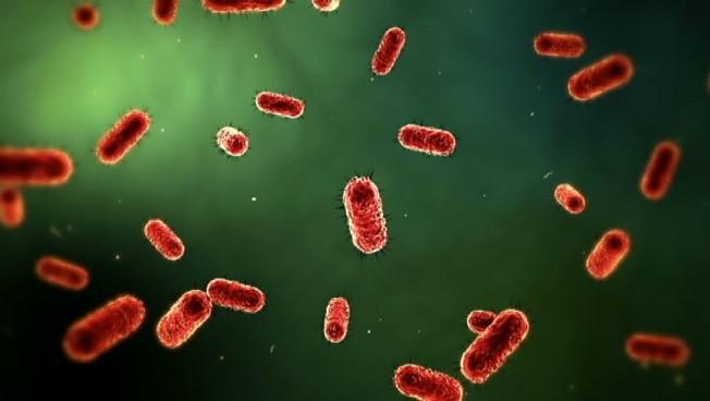 Intestino e salute i probiotici per lequilibrio del microbiota