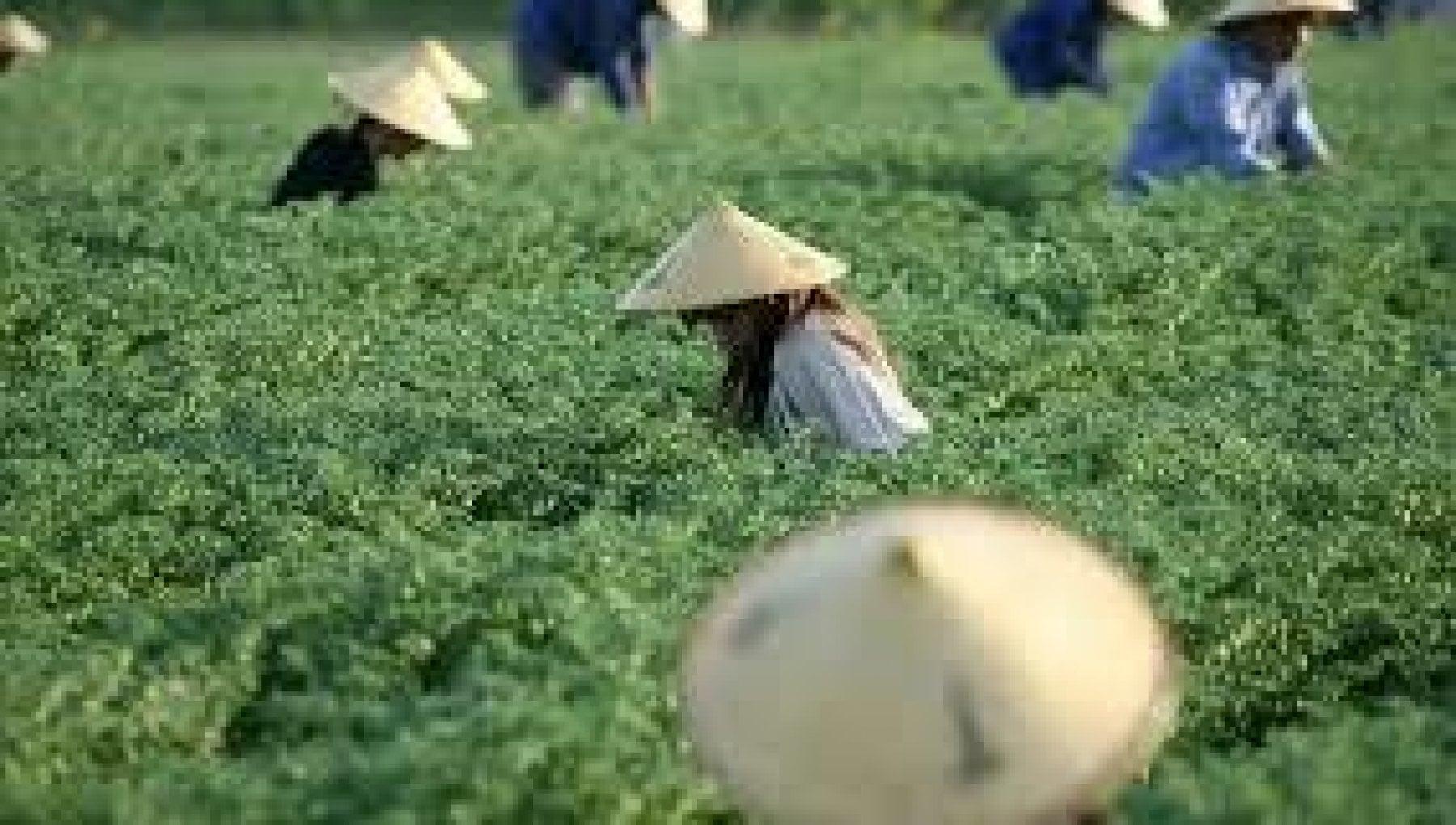 La Cina annuncia la missione compiuta Anche lultima provincia ha sconfitto la poverta