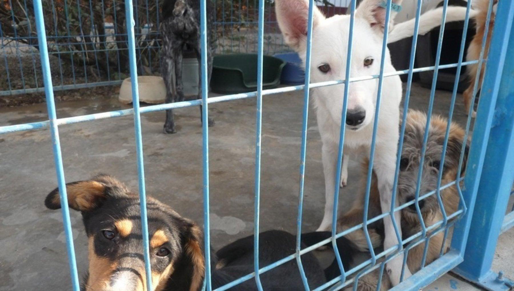 Animali domestici e fauna selvatica aiuti fiscali ed economici nella legge di bilancio