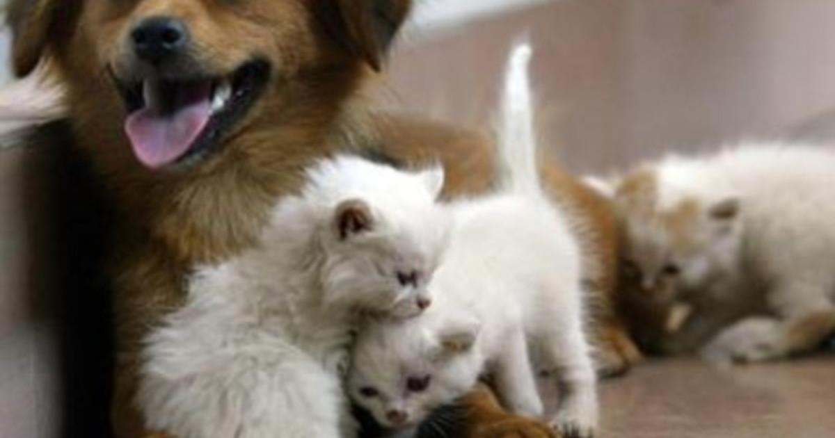 Capodanno 2020 la guida Lav per gli amici animali