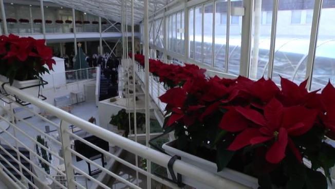 Confagricoltura 5.500 Stelle di Natale per personale del Gemelli