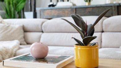 Le piante purificano la casa. E il cuore