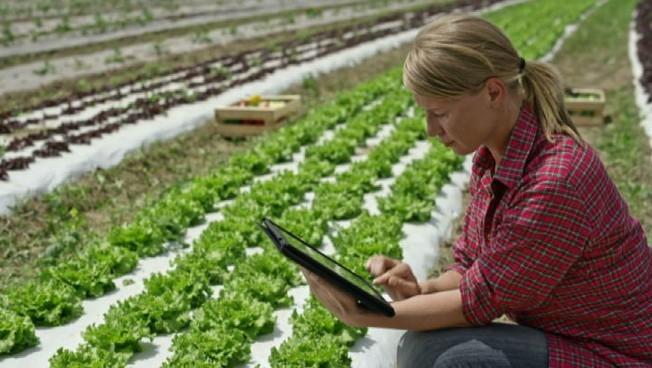 Start up Wapi software house che sviluppa app per lagricoltura