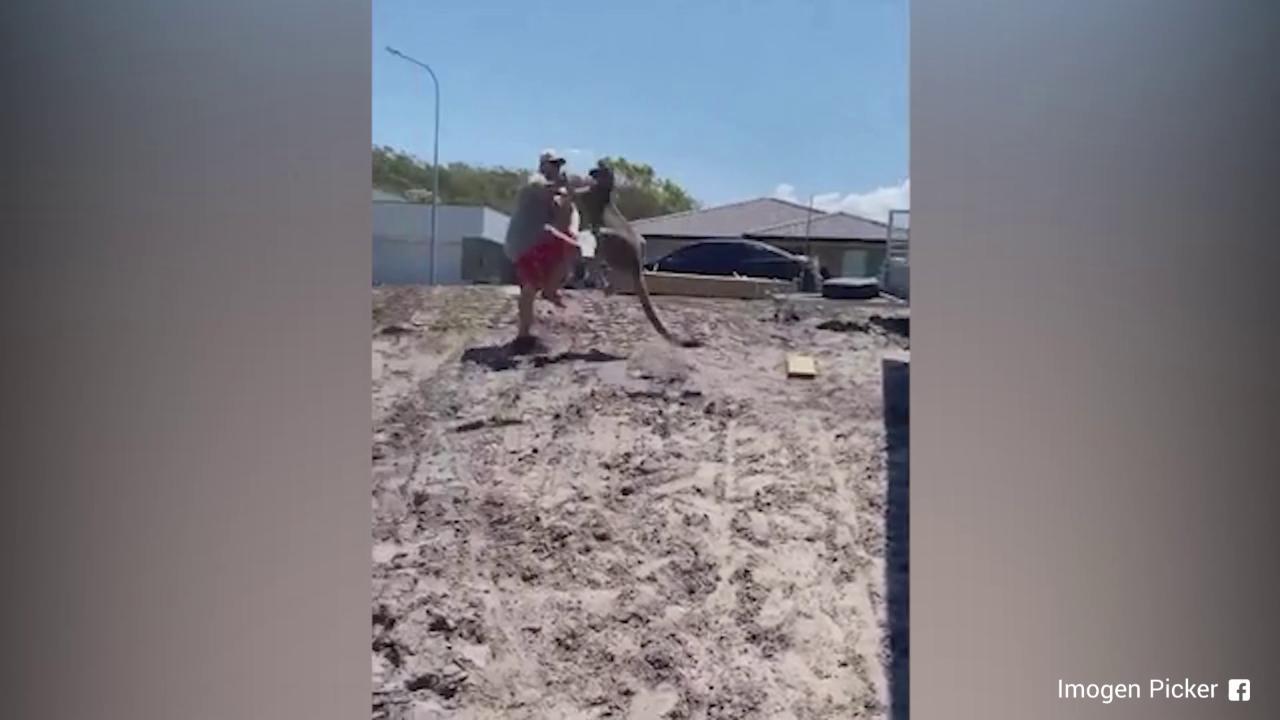 Tenta di allontanare un canguro dal giardino di casa lanimale reagisce cosi