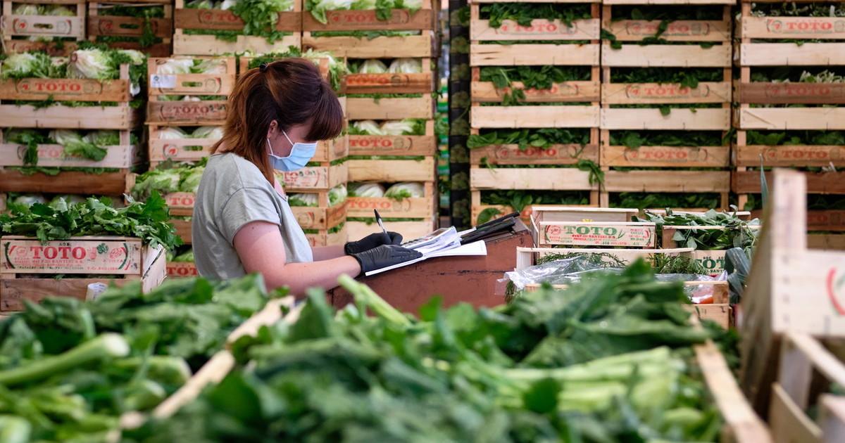 Agroalimentare agire apprendere e innovare la sfida della cooperazione per il futuro
