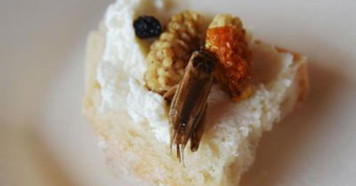 Alimenti insetti a tavola primo ok Efsa cibi a base di verme giallo