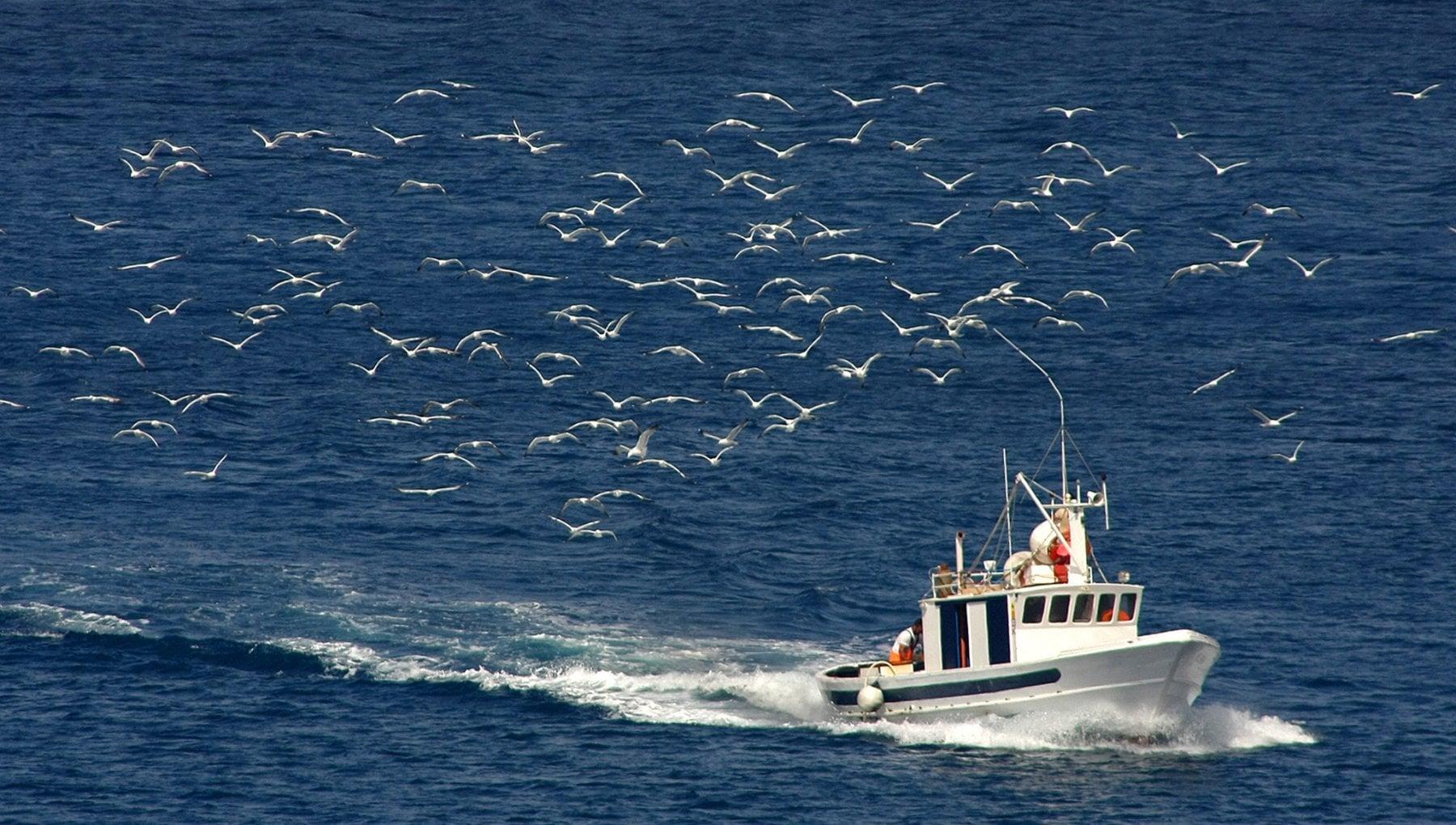 Ambiente nelle isole Eolie la guerra dei totani tra ecologisti e pescatori