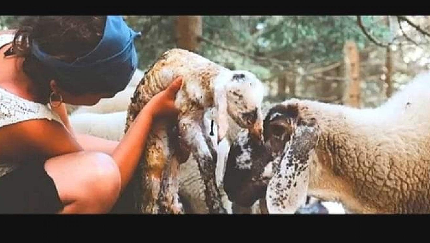 Beatrice 19 anni si prendera cura delle capre di Agitu