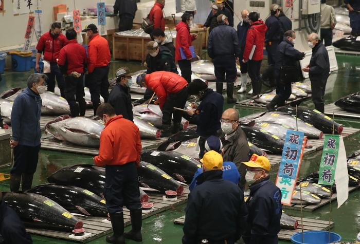 Giappone Tokyo a prima asta tonni prezzi giu del 10