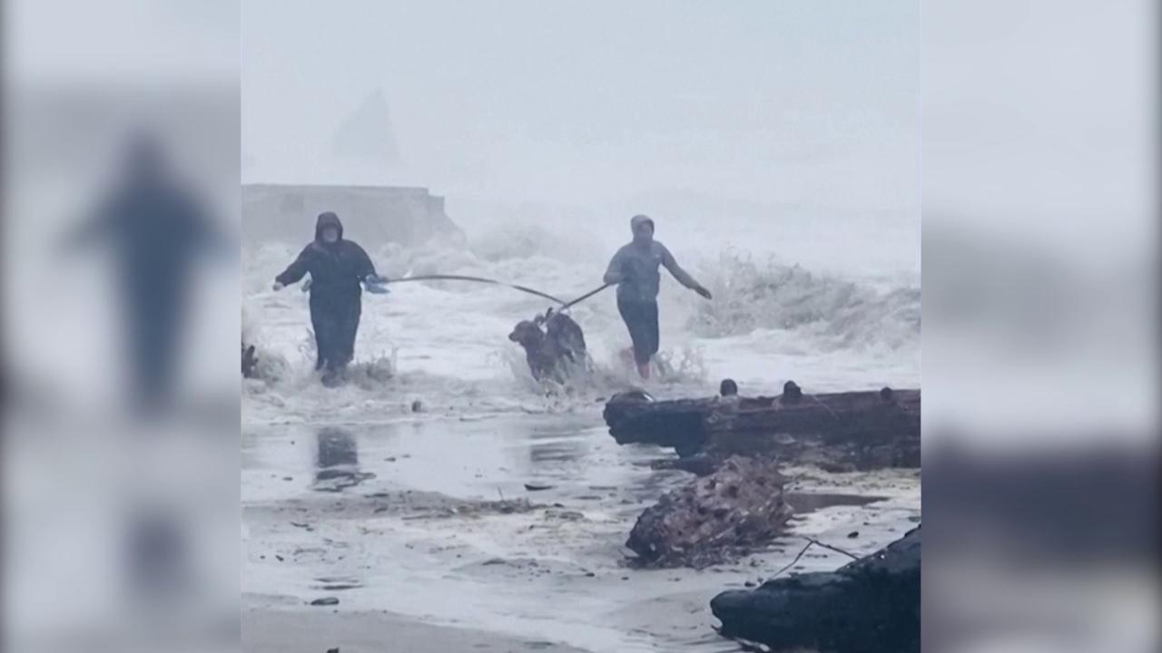 Mareggiata sulla costa la passeggiata con i cani diventa una fuga dalle onde