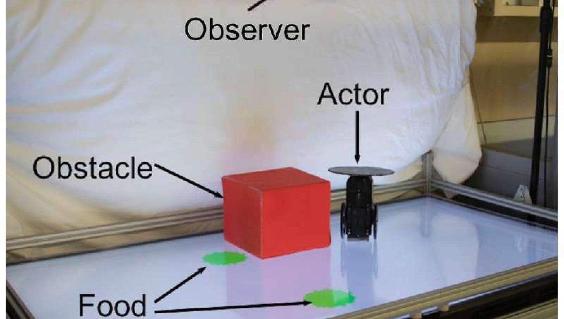 Nei robot si accende la prima scintilla dellempatia