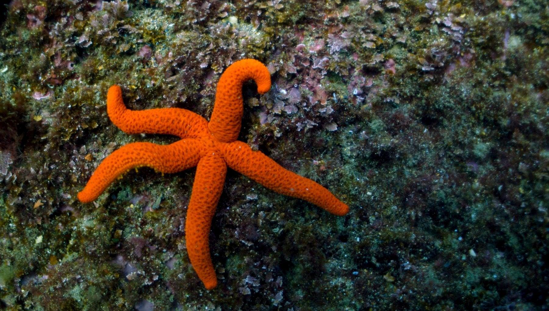 Nelle stelle marine il segreto del surriscaldamento globale