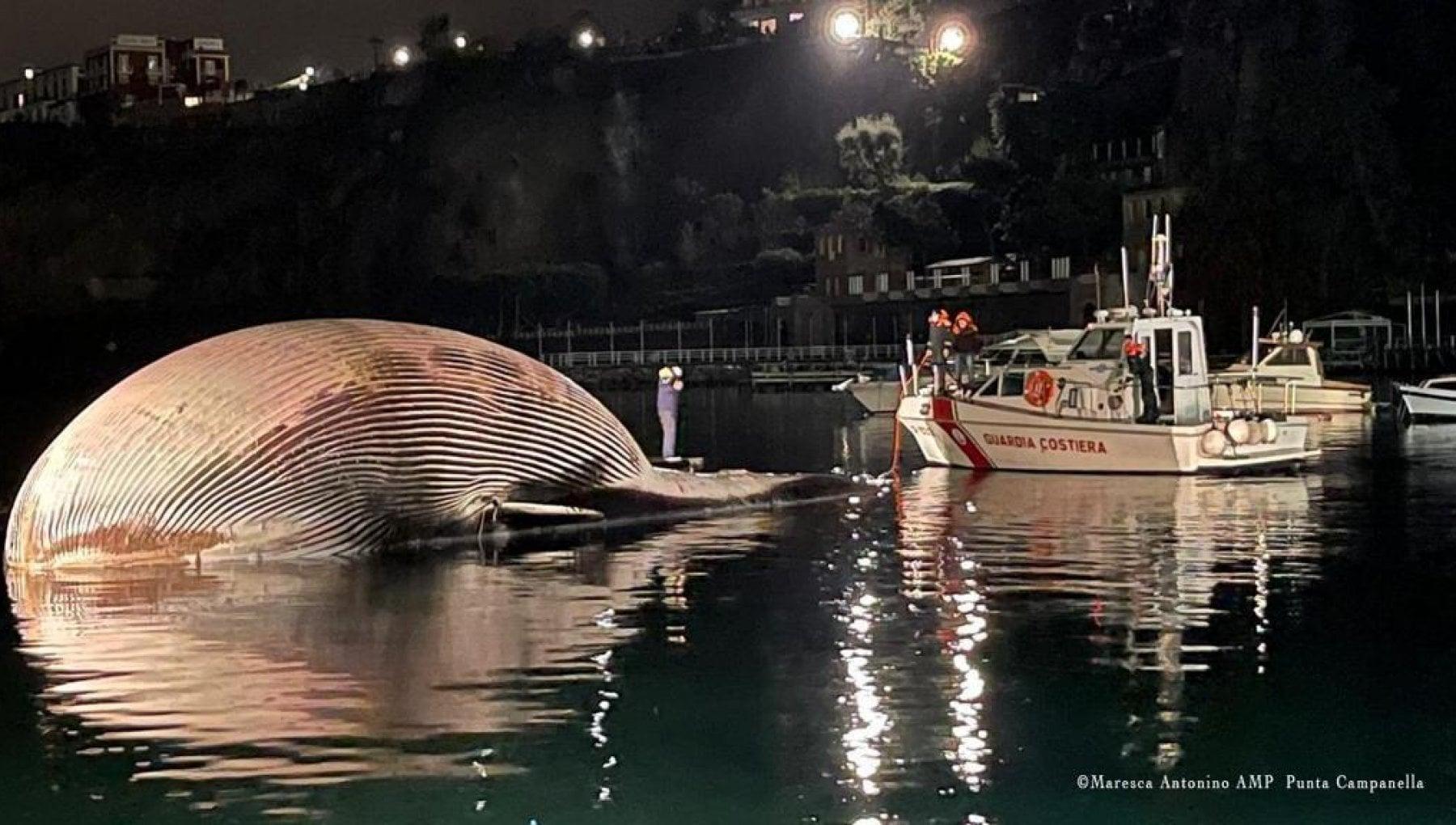 Sorrento un museo per lo scheletro della balena da record
