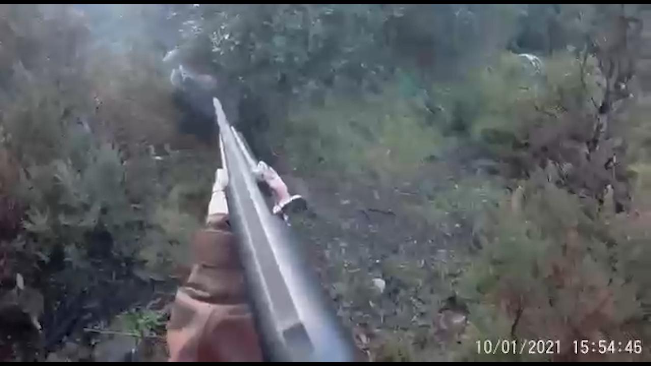 Spara a un cinghiale e viene attaccata si salva colpendolo con la canna del fucile