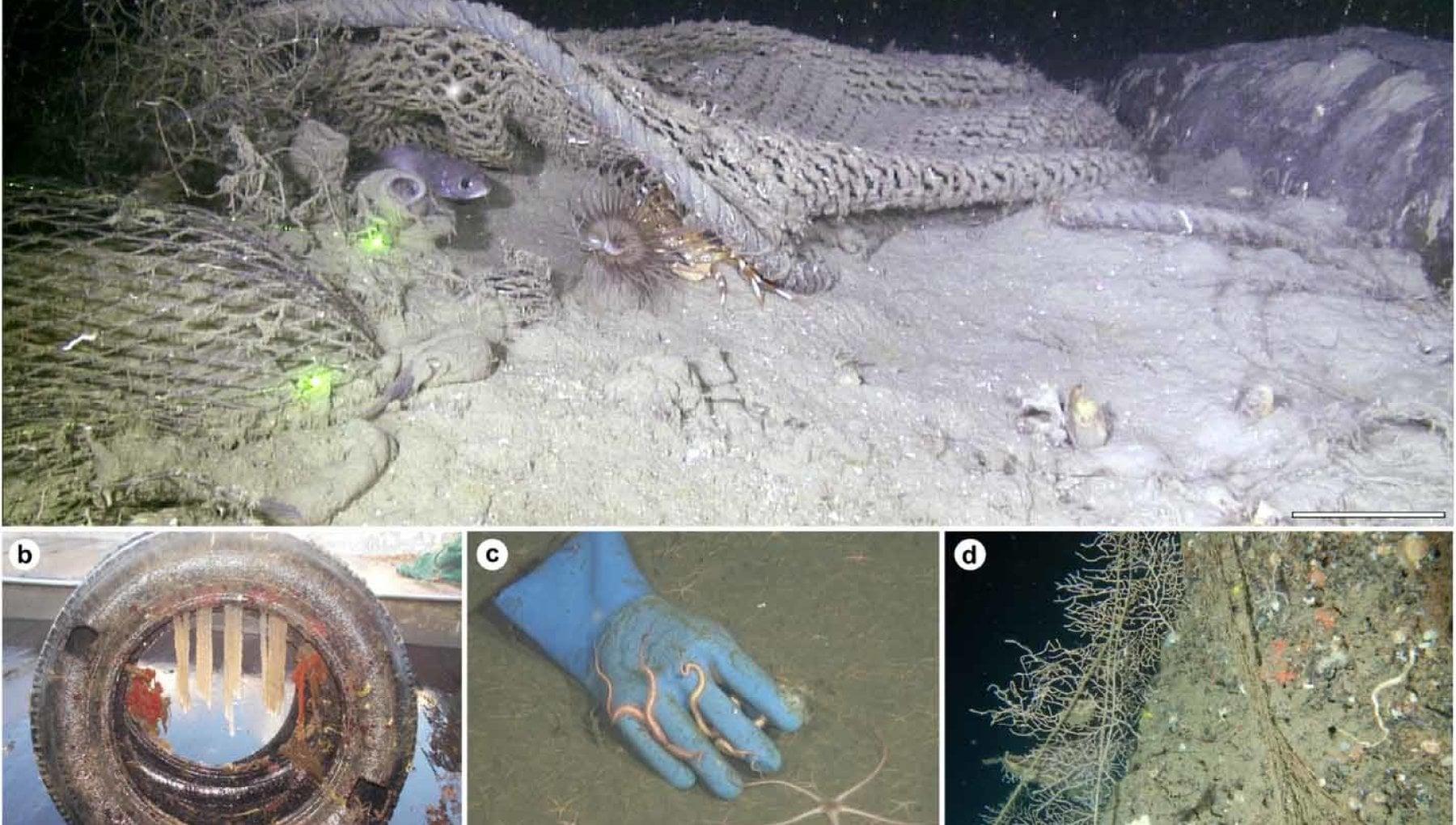 Un mare di spazzatura sul fondo lo Stretto di Messina ha la piu grande densita di rifiuti al mondo